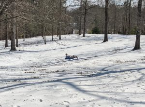 One Pelahatchie Elementary student took advantage of the densely packed ice by using her iced hill and boogie board to entertain herself.